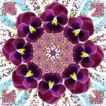 Mandala Viola