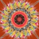 Mandala New