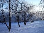 Зимний сад у 26 школы