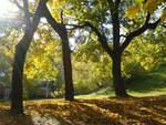 Деревья на Шеиновом бастионе