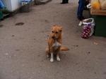 Пёс на рынке