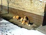 Собачья семейка