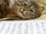 кот и ноты...