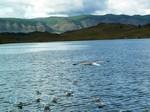 Чайки над озером Байкал