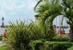 Сочи,пальмы,море,маяк