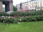 Городские цветы- 2