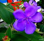 Цветы Кавказа