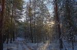 В лесу ...